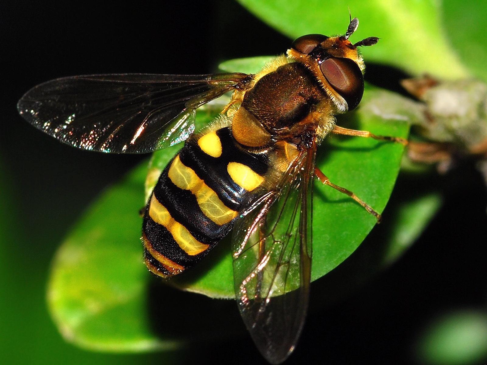 Картинка с насекомыми, картинки приколы